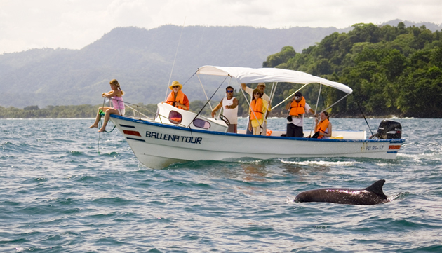 Dolphin tour on the south Pacific coast of Costa Rica.