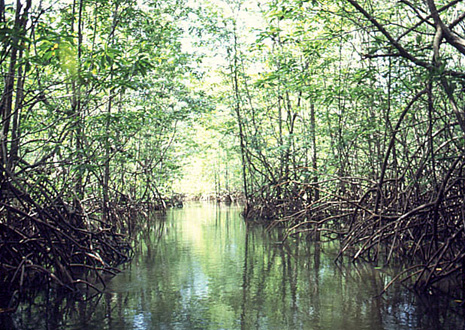 Boat tour through mangrove forests at Damas Island, near Manuel Antonio.