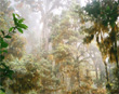 Primordial rainforest