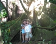 Kids and big tree