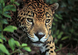 Wildlife and Birding Costa Rica Expeditions